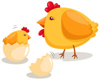 Hatching chicken vector illustration
