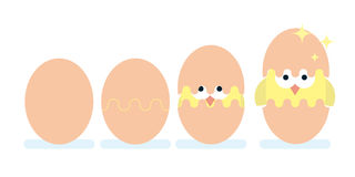 Hatching of chicken from egg. Royalty Free Stock Photo