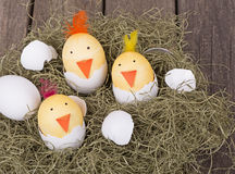 Hatching Easter egg chicks. Three Easter eggs decorated as hatching chicks Royalty Free Stock Image