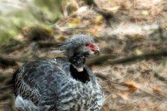 Hatchling Bird nesting against nature background Royalty Free Stock Photos