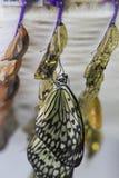 Hatchling fresco Fotos de Stock Royalty Free