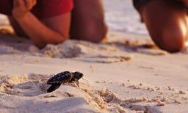 Hatchlingen för havssköldpaddan, Loggerhead behandla som ett barn royaltyfri fotografi