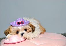 hatt som jag pink till önskad wear Royaltyfria Bilder
