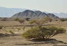 Hatta Mountain And Trees Royalty Free Stock Photography