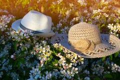 Hattar på en blomningfilial Arkivbild