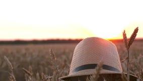 Hatten ligger på de mogna öronen av vete i fältet på solnedgången Slutet av skörden, jordbruk som brukar stock video