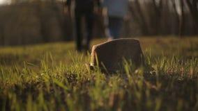 Hatten, som ligger på gräset, mot bakgrunden av övergående personer stock video