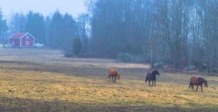Hatuna, Schweden - 1. April 2017: Pferde nahe Haggeby, Schweden Stockfotos