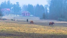 Hatuna, Suède - 1er avril 2017 : Chevaux près de Haggeby, Suède Images libres de droits
