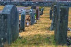 Hatuna, Zweden - April 1, 2017: Graven in de kerk van Haggeby, royalty-vrije stock foto
