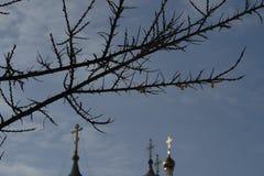 Hauben gegen blauen Winterhimmel stockfoto
