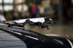 Haubenverzierung (Jaguar im Sprung) des Coupés Sportauto Jaguars XK150 S Stockfoto