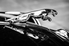 Haubenverzierung (Jaguar im Sprung) des Jaguar-Kennzeichens 2 Stockfotografie