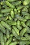 Haufen der grünen Gurken Lizenzfreies Stockfoto