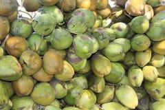 Haufen der zarten Kokosnuss Stockbilder