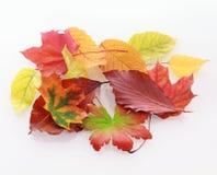 Haufen des bunten verblaßten Herbstlaubs Stockfoto