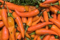 Haufen des glühenden Paprikapfeffers - Lebensmittelhintergrund Lizenzfreie Stockbilder