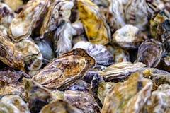 Haufen von frischen Austern auf dem Markt Weicher Fokus stockfoto
