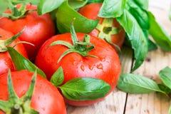 Haufen von frischen reifen organischen Tomaten mit Wassertropfen zerstreute auf hölzernen Küchentisch, grüner Basilikum, natürlic Lizenzfreie Stockfotos