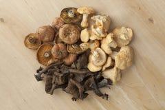 Haufen von frischen wilden Pilzen Lizenzfreies Stockfoto