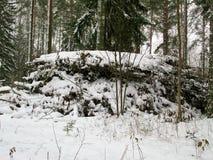Haufen von geschnittenen Baumasten in einem Winter-Wald Lizenzfreie Stockfotos