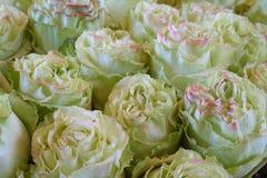 Haufen von grünen Rosen Lizenzfreies Stockfoto