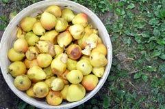 Haufen von reifen süßen Birnen stockbild