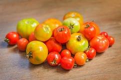 Haufen von roten und grünen Tomaten Lizenzfreies Stockbild