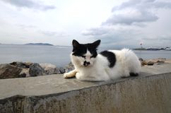Haughty black and white cat is standing in front of the island Stock Photo