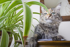 Haughty Cat. Cat on a table next to a houseplant with a haughty expression Stock Photo