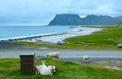 Haukland beach summer view (Norway, Lofoten). Royalty Free Stock Images