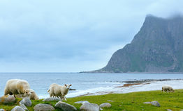 Haukland beach summer view (Norway, Lofoten). Royalty Free Stock Image