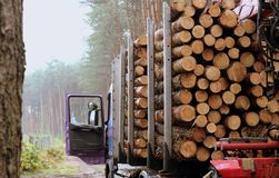 Haulage timber. And pine trunks - timber industry Royalty Free Stock Image