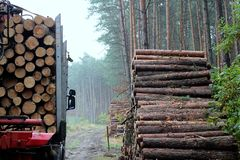 Haulage timber. And pine trunks - timber industry Stock Image