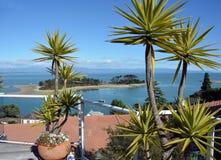 Haulashore-Insel, Nelson New Zealand Stockbilder