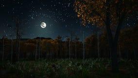 Haunted autumn forest at dark night 4K