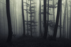 Haunted dark forest at night Royalty Free Stock Photography