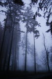 Haunted forest Stock Image