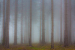 Haunted forest in the fog Royalty Free Stock Image