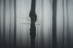 Haunted forest Royalty Free Stock Photo