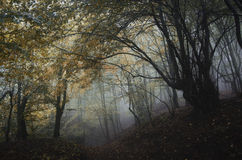 Haunted forest with fog in autumn on Halloween Royalty Free Stock Photography