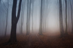 Haunted forest with fog in autumn on Halloween Stock Photo
