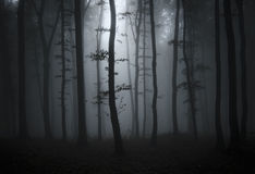 Haunted forest with fog on Halloween Stock Photos