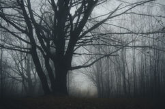 Haunted forest with fog on Halloween. Path in dark haunted mysterious forest with fog on Halloween royalty free stock image