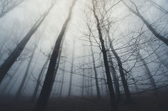Haunted forest with fog trough trees Stock Image