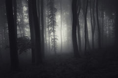 Haunted forest at night Royalty Free Stock Photography