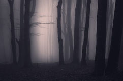 Haunted forest at night Stock Image