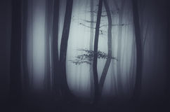 Haunted forest at night Stock Photography