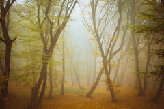 The haunted forest. From Romania, Cluj-Napoca Stock Image