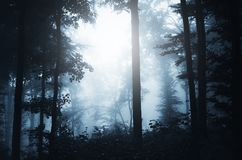 Haunted forest scene Stock Photos